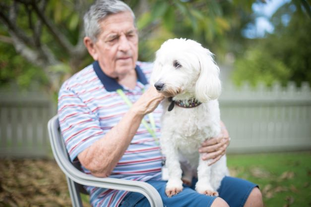 Pet dog and Eden companion with resident